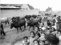 Photo Madagascar Amparamanina (près Du Lac D'Alaotra) Rentrée Des Zébus 1998 Vivant Univers - Afrika