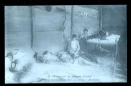 MONTELEONE CALABRO VIBO VALENTIA TERREMOTO DEL 1905 ALCUNI FERITI IN UNA BARACCA - Vibo Valentia