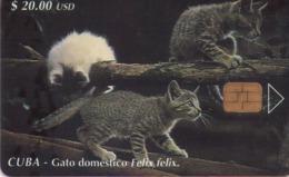 TARJETA TELEFONICA DE CUBA.  GATOS - CATS - CHATS. (GATO DOMESTICO) (331) - Gatos