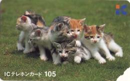 TARJETA TELEFONICA DE JAPON. GATOS - CATS - CHATS. (213) - Gatos