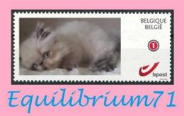 DUOSTAMP** / MYSTAMP** - Chat Persan / Perzische Kat / Persian Cat / Perserkatze - Belgique