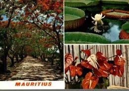 ILE MAURICE  MAURITIUS  LES FLAMBOYANTS ET FLEURS TROPICALES - Mauritius