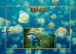 Palau Jellyfish Lake New Postcard - Palau