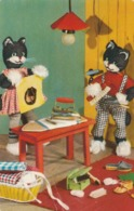 Katten  Glanzend - Chats