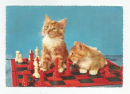 Cpsm Chatons Jeux D'échec - Chess