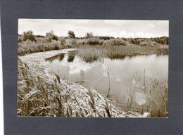 88859   Germania,   Bredstedt/Schleswig,  Bordelumer Heide,  VG  1956 - Bredstedt