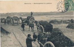 I149 - 50 - BLAINVILLE - Manche - Déchargement Du Goémon - Blainville Sur Mer