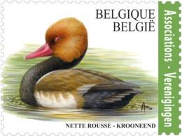 BUZIN 4759** Krooneend / Oiseaux - Vogels - Birds - Nette Rousse** - 1985-.. Vogels (Buzin)