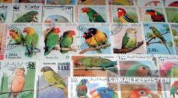 Motives 50 Different Parrots Stamps - Parrots
