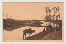 Egypt - Vintage Post Card - Cairo Landscape - Aegyptologie
