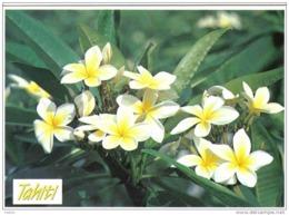 Carte Postale Polynésie Française Tahiti   Tipanité  Fleurs Trés Beau Plan - Tahiti