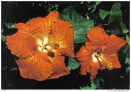 Carte Postale Polynésie Française Tahiti   Hibiscus  Fleurs Trés Beau Plan - Tahiti