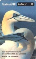 TC Puce NEUVE NSB CANADA / 1125 Ex - Animal - OISEAU / FOU DE BASSAN - GANNET Bird MINT Chip Phonecard - 4479 - Canada
