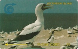 Télécarte GPT ASCENSION - Animal - OISEAU - FOU MASQUE - GANNET BIRD Phonecard - VOGEL - 4480 - Ascension