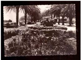 Marruecos. Tarjeta Postal. Tanger. Avenida De España. Plantas. Arboles. Palmeras. Foto Real. - Árboles