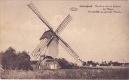 LOVENJOEL, Windmolen Van Bruul. - Bierbeek