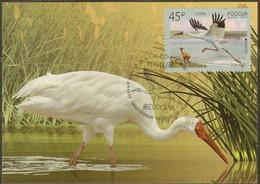 2019-2436 Russia Maximum Card Canc St.Petersburg EUROPA CEPT Fauna. Birds: Siberian Crane Mi 2653 - 2019