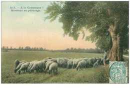 AGRICULTURE.n°11115.A LA CAMPAGNE.MOUTONS AU PATURAGE.MOUTONS - Elevage