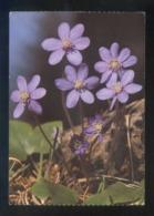 *Hepatica Nobilis* Circulada Oslo 1983. - Noruega