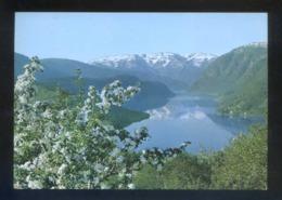 Ulvik. *Hardanger Fjord* Circulada Oslo 1980. - Noruega