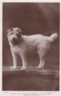 AR77 Animals - Caesar, The Late King Edward's Favourite Dog - RPPC - Dogs