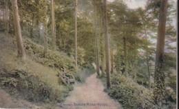 AT03 Bangor Menai Woods - Anglesey