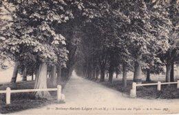 L100D_423 - Boissy-Saint-Léger - 50 L'Avenue Du Piple - Boissy Saint Leger