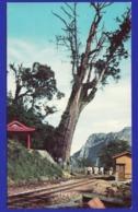TAIWAN The Sacred Tree Mount Années 70 ( Très Très Bon état ) +1741 - Taiwan