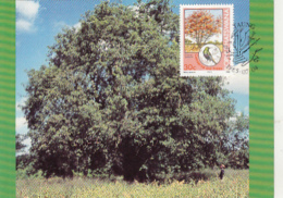 TREES, COMMON CORAL TREE, CM, MAXICARD, CARTES MAXIMUM, 1985, BOPHUTHATSWANA - Trees