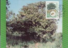 TREES, STAMVRUG, CM, MAXICARD, CARTES MAXIMUM, 1985, BOPHUTHATSWANA - Trees
