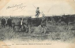 DANS LE LANGUEDOC - Manade De Taureaux De G.Papinaud. - Crías