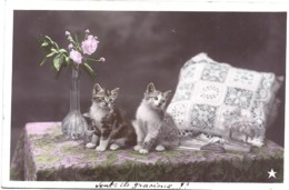 CPSM - Petits Chats Gracieux - Gatos