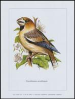 "Belgium Birds Of Andre Buzin, Plate From ""Buzin-box Collection"" 2010 RRR Incomplete Set, 91 Plate - Album & Raccoglitori"