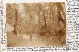 Brignais :allée Des Chênes ,cliché Amateur Carte Photo...1903 - Brignais