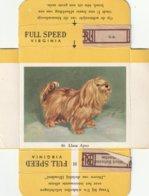 Llasa Apso, FULL SPEED VIRGINIA  Nr 46 - Sigarette