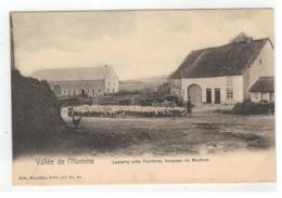 Lesterny Près Forrières,troupeau De Moutons - Nassogne