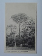 Gorizia 432 Grado 1905 Pine Belvedere Ed Atelier Wessely Fratelli Grigolon - Otras Ciudades