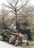 44 - Loire Atlantique -SAINT LYPHARD - Village De Pingrin Dechargement De Fagots- Tracteur - Metier Du Bois - Saint-Lyphard