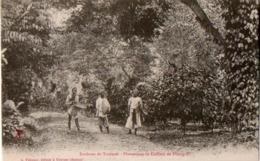 INDOCHINE - ANNAM -  Environs De Tourane - Plantations De Cafétiers De Phong-Fé - Viêt-Nam