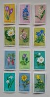 Poland Pologne Set 12 Stamps Flowers Fleures Blumen Fiori 1962 Unused - Flora
