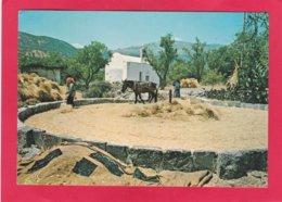 Modern Post Card Of Threshing,Crete, Greece,X34. - Greece