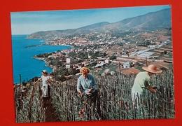 Cartolina Riviera Dei Fiori - San Remo - 1965 - Imperia