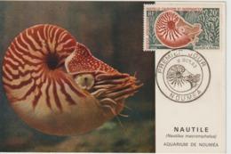 Nouvelle Calédonie 1962 Carte Maximum Nautile PA 68 - Tarjetas – Máxima
