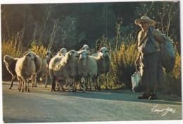 Ibiza/Formentera - Hora Punta / Verkehr / Heure De Pointe / Rush Hour - (Baleares) - Sheep-Schafe-Moutons-Schapen - Ibiza
