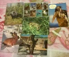 6 CARTOLINE ANIMALI  (119) - Cartoline