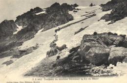 Troupeau De Moutons Traversant Le Col Du Géant RV - Chamonix-Mont-Blanc