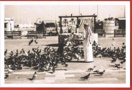 QATAR- In Celebration Of QATAR DAY- Pigeons-Puits  -scans Recto Verso-Paypal Sans Frais - Qatar