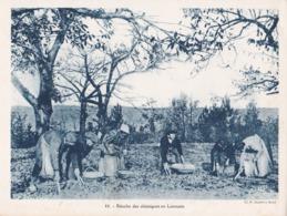 LIMOUSIN, Récolte Des Châtaignes - Sammelkarten, Lernkarten