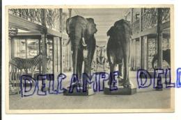 Groupe De Grands Mammifères. Musée Royal D'Histoire Naturelle De Bruxelles. NELS - Éléphants