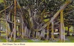 ARBRE Tree ( USA Florida ) GIANT BANYAN TREE / Figuier Des Banians Ou Banian De L'Inde - CPA - Bome Boom Albero árbol - Bäume